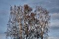 PermaLiv tre bjørker ved gamlevegen 02-05-20 1.jpg