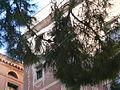 Pi de la plaça del Pi P1100951.JPG