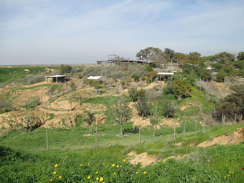 חוות בולוטין בנגב