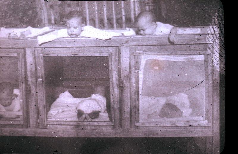 תינוקות בלולי עץ