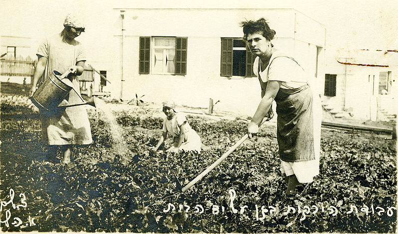 גידול ירקות על יד הבית