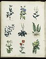 Plants and herbs from Culpeper's 'The Complete Herbal...' Wellcome L0034813.jpg