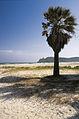 Poettu beach.jpg