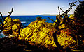 Point Lobos Reserve, Carmel USA California --- Naturreservat 'Point Lobos' südlich von Carmel, direkt am Pazifik (10650082165).jpg