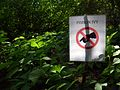 Poison ivy (27644367116).jpg