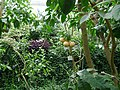 Poland. Warsaw. Powsin. Botanical Garden 111.jpg