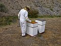 Pollinators10.tif (39002812482).jpg