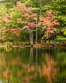 Pond Reflection (15143674077).jpg