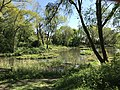 Pond at Brickfields Country Park Aldershot.jpg