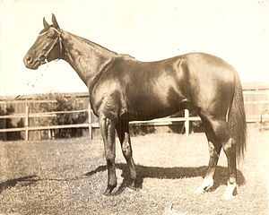 Caulfield Cup - 1906, 1907 winner – Poseidon