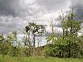 Postojna - broken trees5.jpg