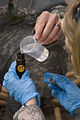 Preventative medicine team works out the bugs for U.S., Afghan troops in Heart DVIDS165077.jpg
