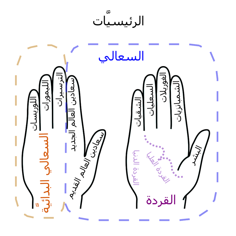 File Primate Hand Mnemonic Ar Png Wikimedia Commons