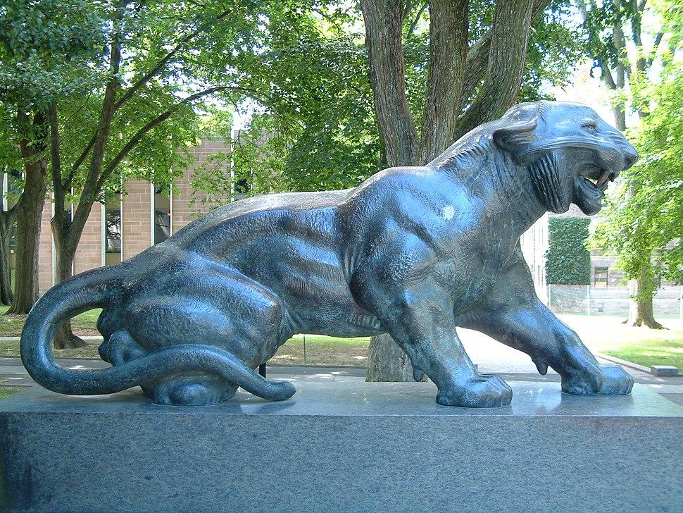 Princeton University Cleo tiger