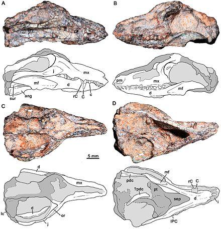 Protheriodon