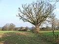 Public Footpath, Bobbington, Staffordshire - geograph.org.uk - 379385.jpg