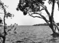 Queensland State Archives 303 Looking across Lake Cootharaba towards Boreen Point c 1931.png
