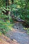 Quer auf dem Wanderweg liegender Baumstamm.jpg