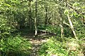 Réserve naturelle régionale des étangs de Bonnelles le 26 mai 2017 - 63.jpg