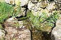 Réserve naturelle régionale du Val-Suzon 026.jpg