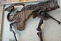 ROM 41 - Parasaurolophus (14173100797).jpg