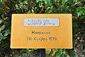 Rapperswil - Duftrosengarten - Harmonie TH Kordes 1981 2010-06-25 18-32-00.JPG