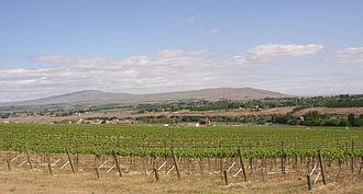 Yakima Valley AVA - Rattlesnake Mountain beyond the Yakima River in Washington state. In the foreground are the Chandler Reach Vineyards in the Yakima Valley AVA.