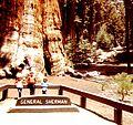 Redwooddaze.jpg