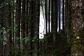 Reinbachfälle taufers 69774 2014-08-21.JPG