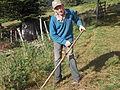 René fauche et entasse le foin dans la grange voisine pour la réserve servant à nourrir les brebis l'hiver.JPG