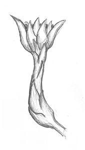 Rhizanthella gardneri 201206.jpg