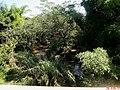 Ribeirão da Estiva na Rodovia Anhanguera SP-330 Km-394 em Guará - panoramio (1).jpg