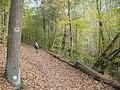 Riemeisterfenn - Waldweg (Woodland Path) - geo.hlipp.de - 29913.jpg
