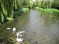River Kennet at Ramsbury - geograph.org.uk - 1409635.jpg