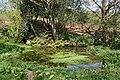 Roadside Pond - geograph.org.uk - 412840.jpg