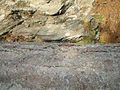 Rock or Tree (475877538).jpg