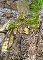Rock textures (8045551798).jpg