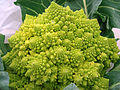 Romanesco broccoli (2).jpg