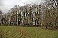 Rooks nesting - geograph.org.uk - 753387.jpg