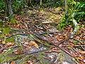 Roots Stairway (15580367837).jpg