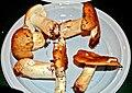 Russula ochroleuca 1.jpg