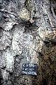 S of Mt Jackson tuffisite dyke with granite clast in gabbro breccia (cu).jpg
