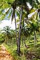 Samaná Province, Dominican Republic - panoramio (156).jpg