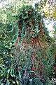 San Francisco Botanical Garden - DSC09847.jpg