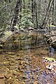Sand Spring Run looking downstream.jpg