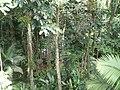 Sankt Lucia - panoramio - georama (44).jpg