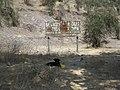 Santa Elena, perros vagos. - panoramio - R.A.T.P..jpg