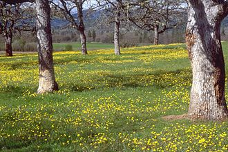 Savanna - Oak savanna, United States