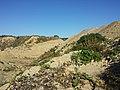 Schottergrube nordwestlich von Asparn an der Zaya sl3.jpg