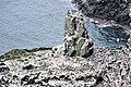 Sea Cliffs with Razzorbill and Guillemots at Rathlin island Seabird Centre.jpg